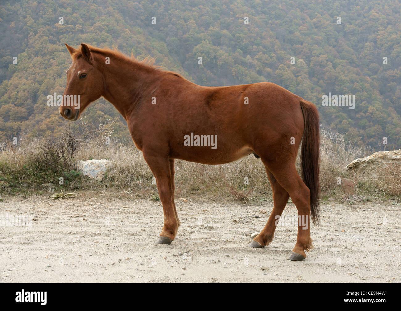 Horse - Stock Image