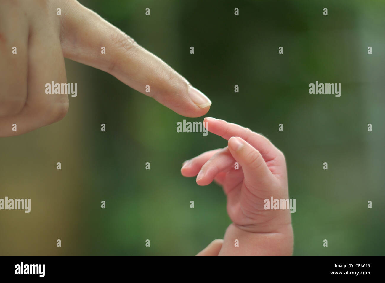 Love touch of mother - Stock Image