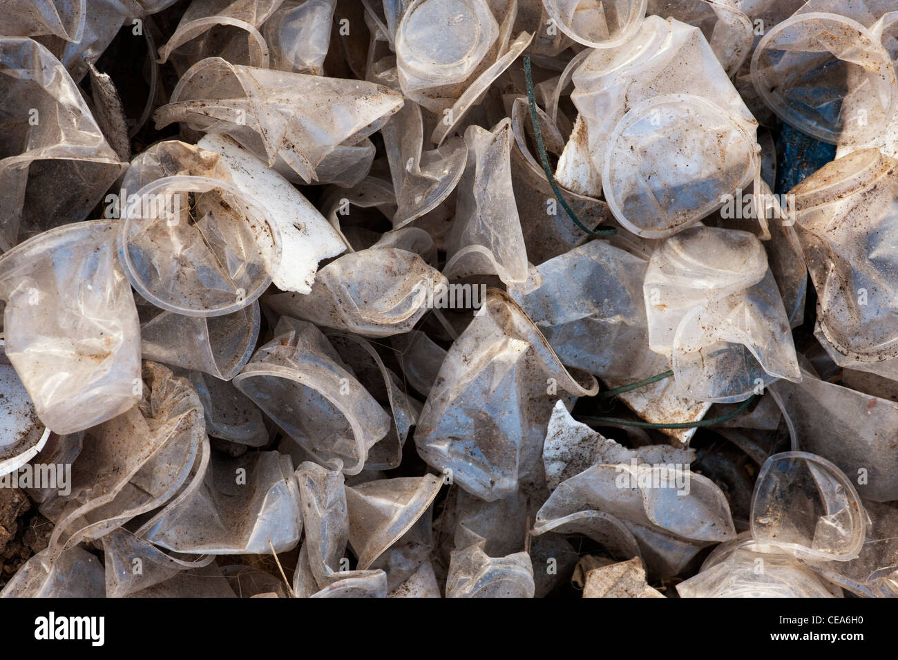Discarded plastic tea cups in the Indian countryside. Andhra Pradesh, India - Stock Image