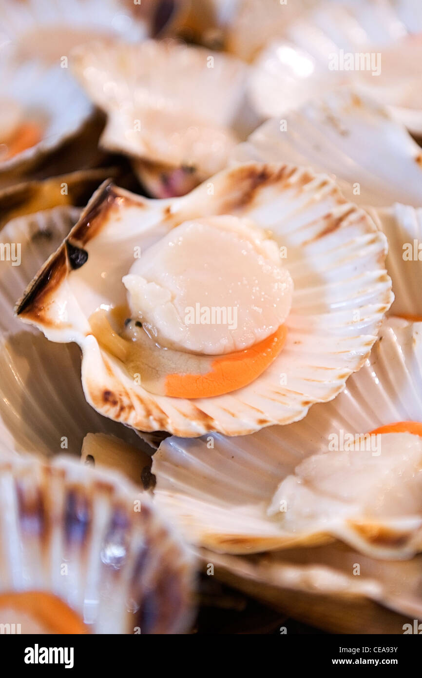 Borough Market London fishmonger big succulent fresh scallop taxonomic family of saltwater clam marine bivalve mollusk - Stock Image