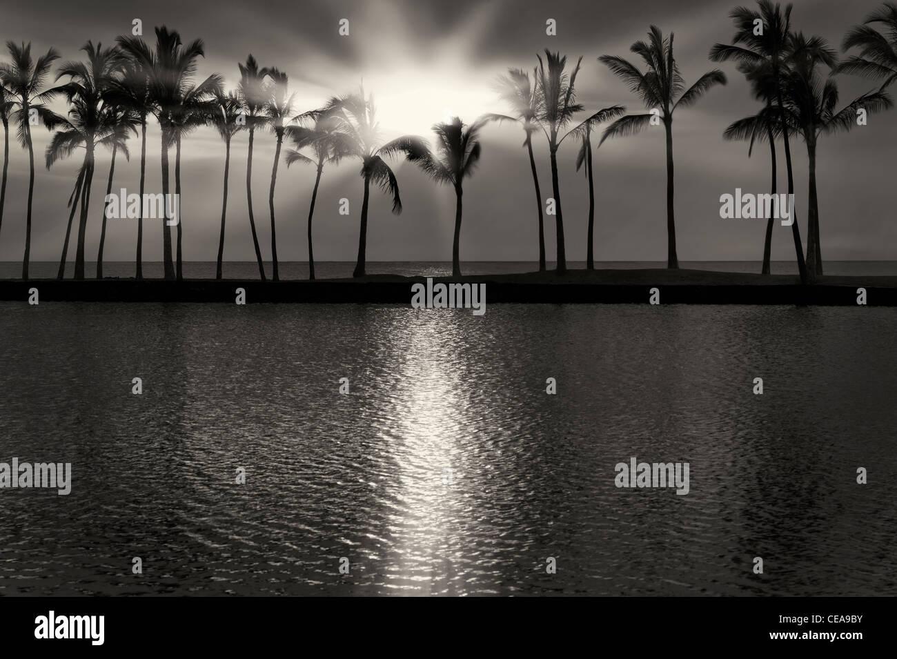 Palm trees and sunset. Hawaii, The Big Island - Stock Image