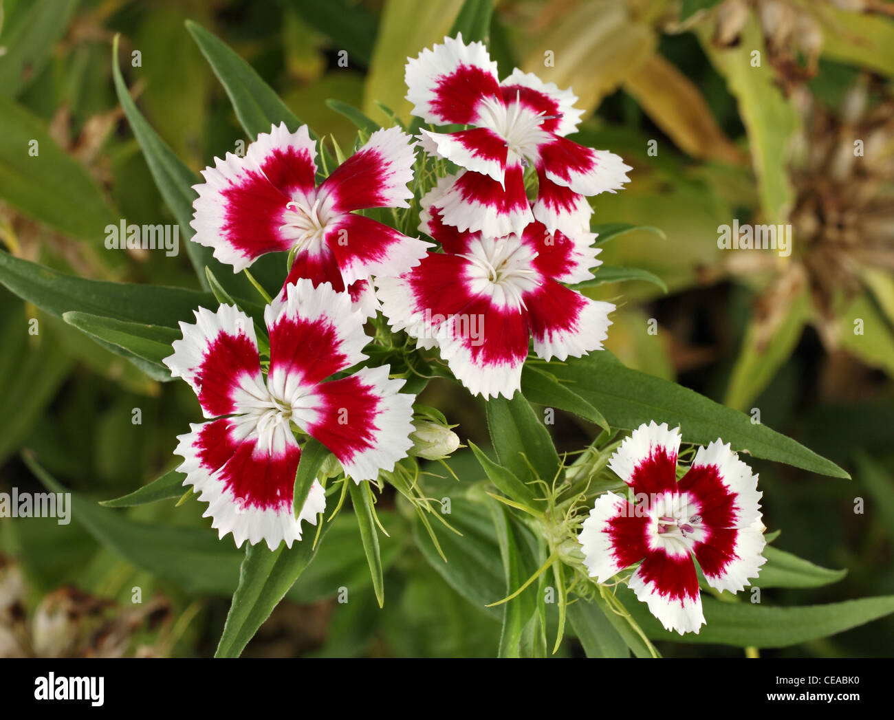 Small bunch of brightly colored red and white flowers stock photo small bunch of brightly colored red and white flowers mightylinksfo
