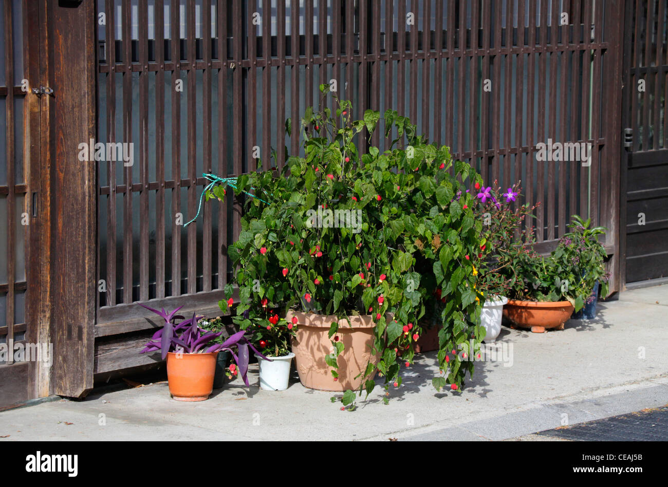 House Plants Japan High Resolution Stock Photography And Images Alamy