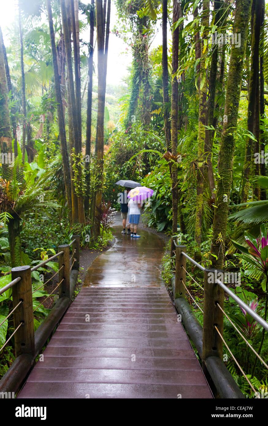 Hawaii Tropical Botanical Garden, Hilo, Big Island, Hawaii - Stock Image