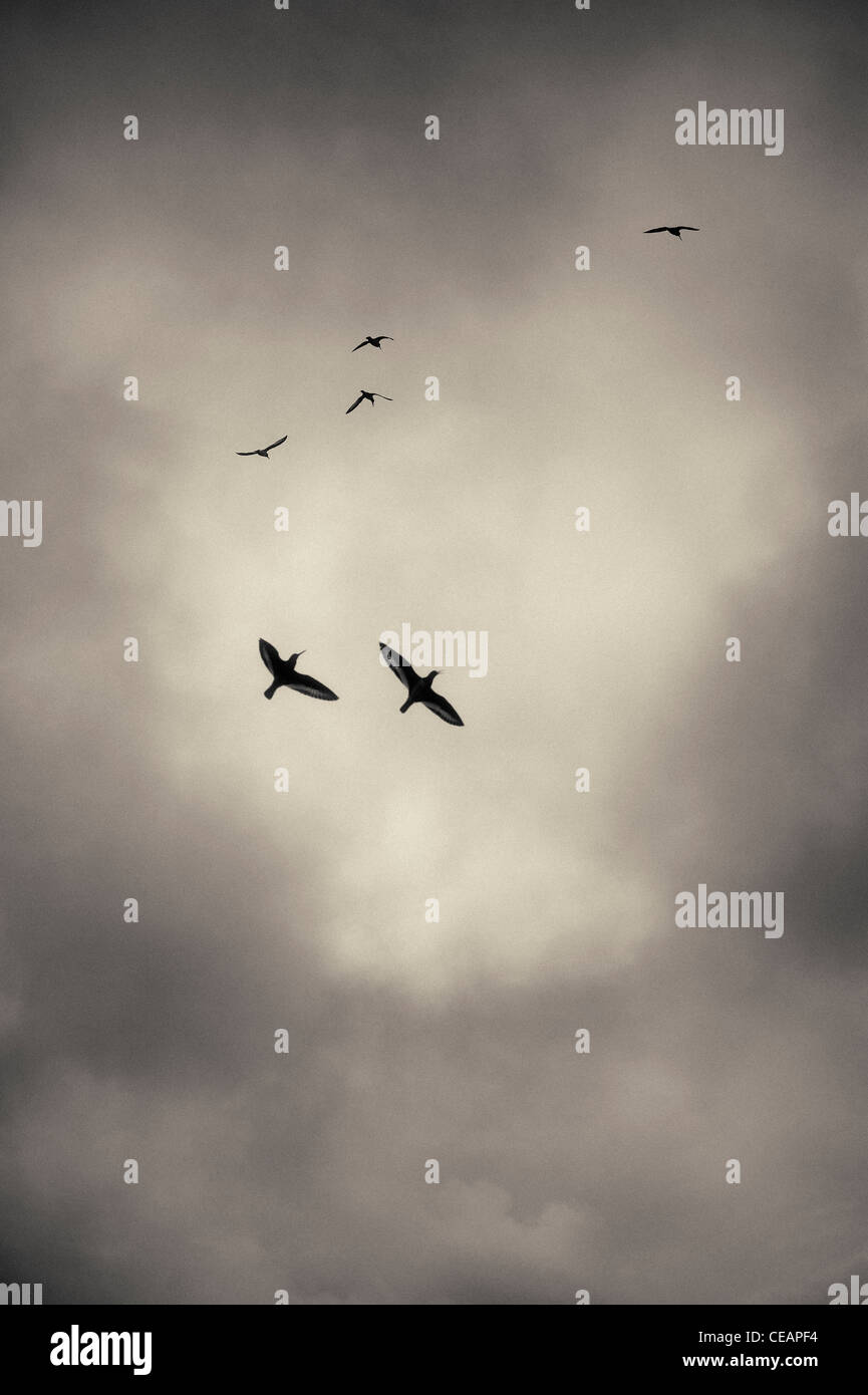 Birds and Storm Clouds - Stock Image