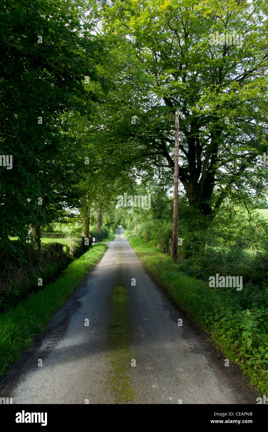 Country Lane, Clones, County Monaghan, Ireland - Stock Image