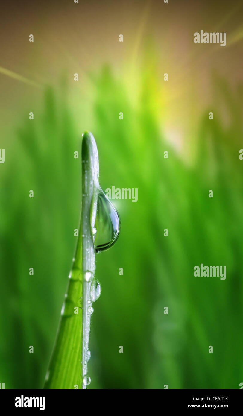 waterdrop on green on a blade of grass. Focus on foreground - Stock Image
