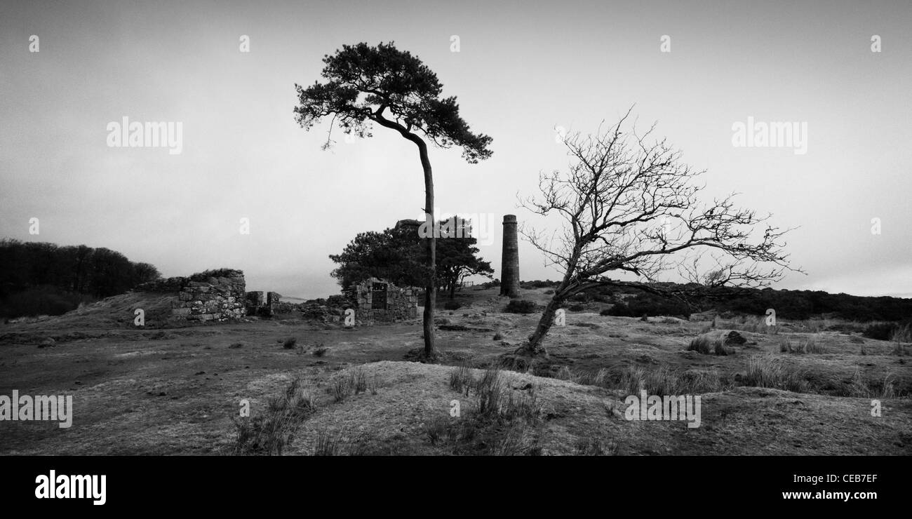View of building remains and a chimney from the Powermills in Dartmoor. The chimney is framed by two windswept trees. - Stock Image