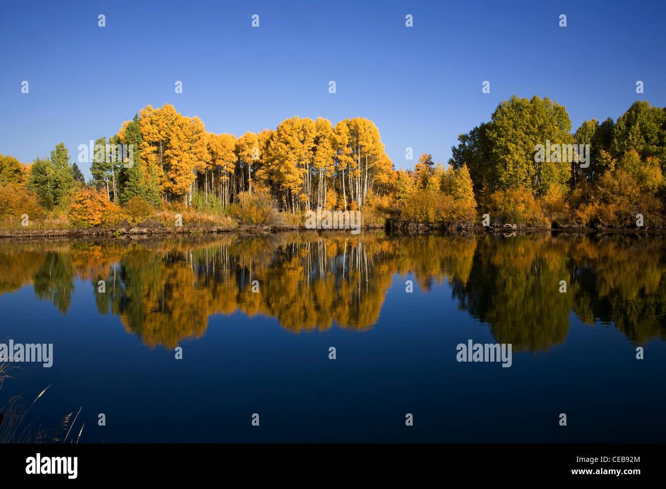 Aspens along the Deschutes River - Stock Image