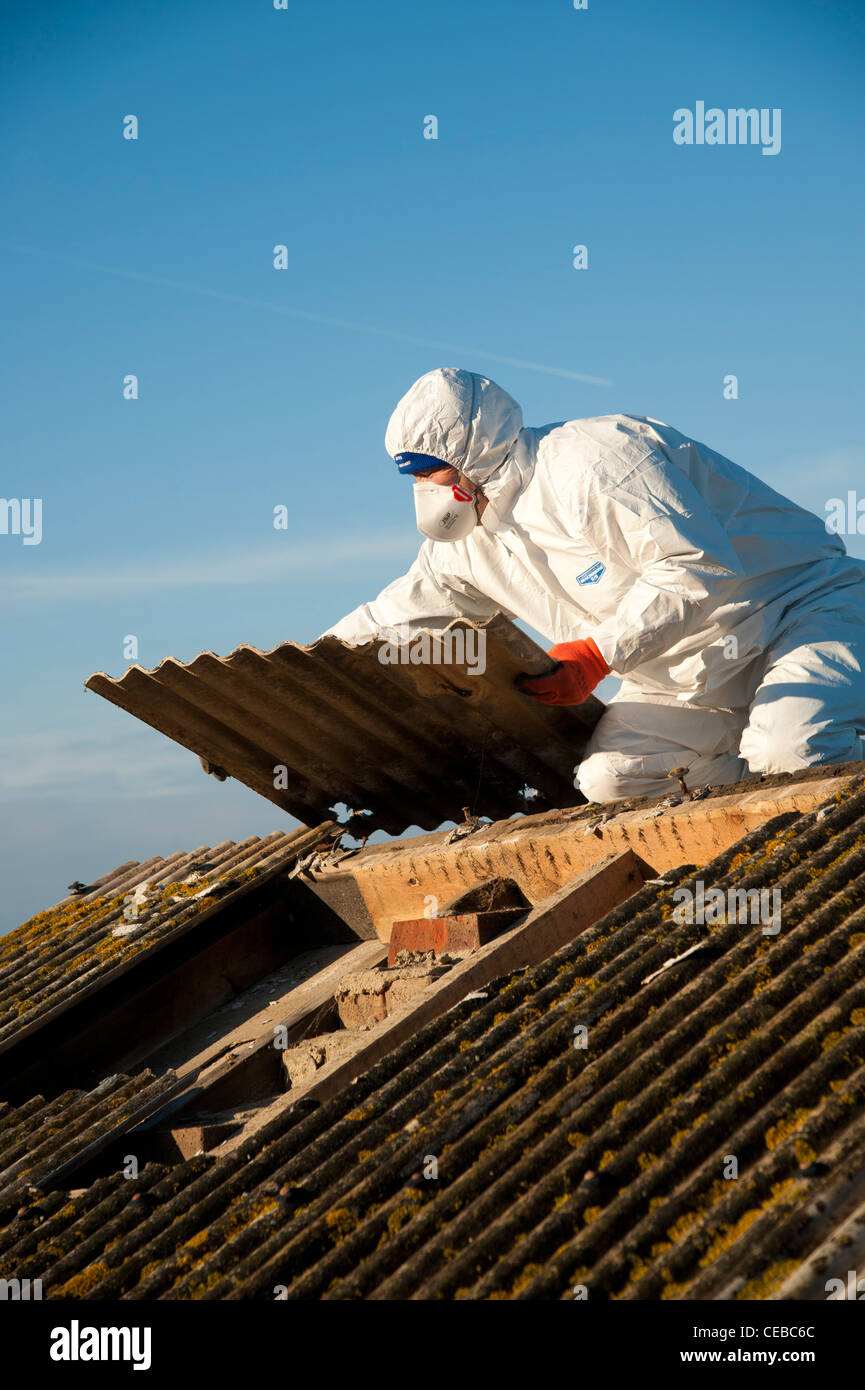 A workman wearing protective clothing and facemask removing asbestos roof tiles from a public shelter, Aberaeron, - Stock Image