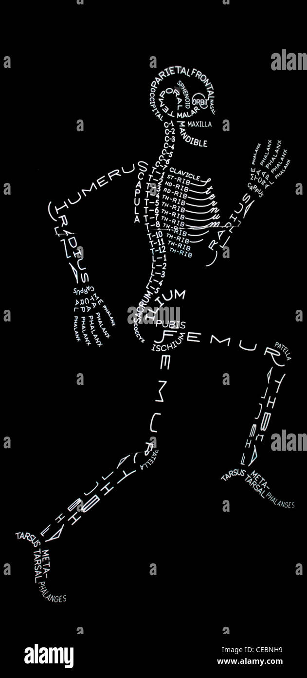 Bones in Human body marked diagrammatically - Stock Image