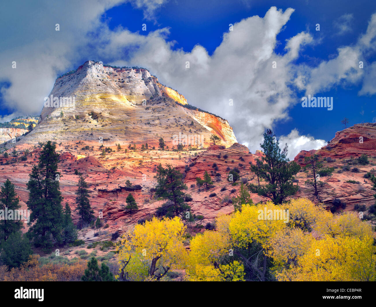 Fall color and clouds.in Zion Plateau Zion National Park, Utah - Stock Image