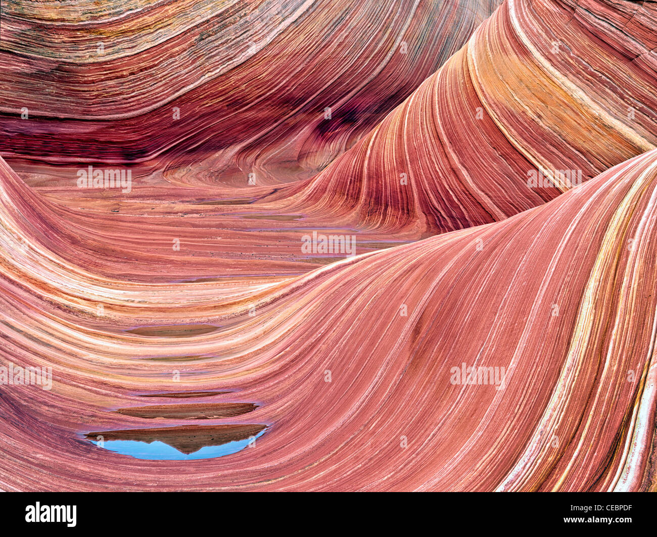 Sandtone Formation And Pool Of Water In North Coyote Buttes The Stock Photo Alamy