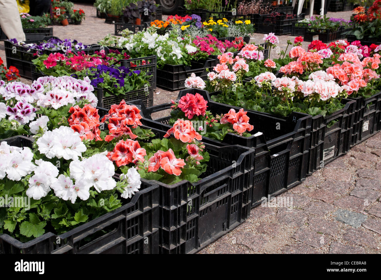 Spring flowers in boxes at an outdoor flower market - Stock Image