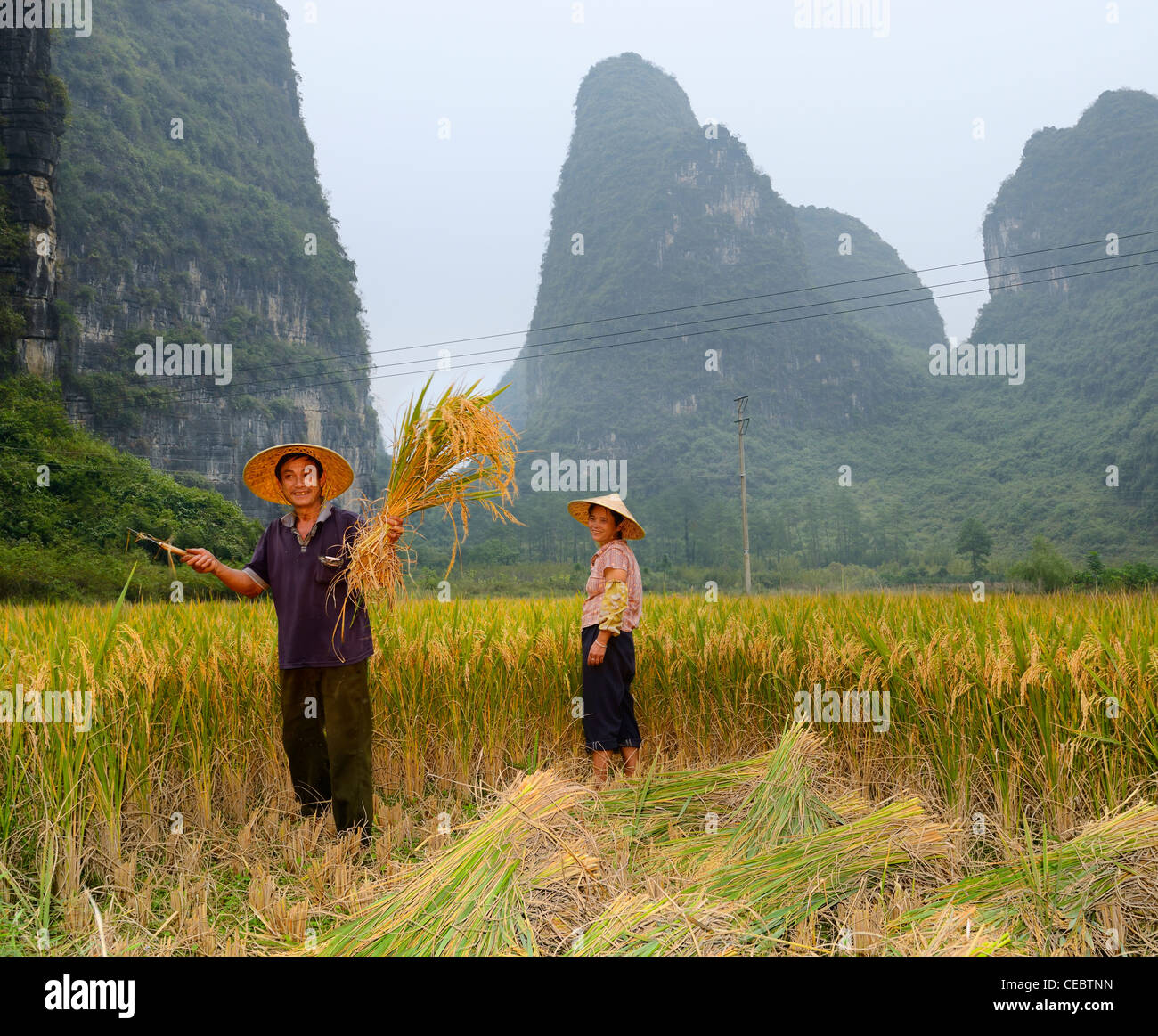 Farmer in field showing hand sickle and bundle of rice stalk crops with pointed Karst limestone peaks near Yangshuo - Stock Image