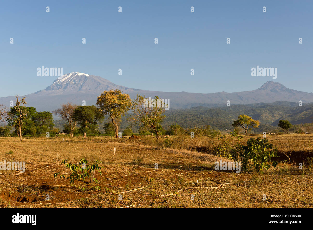 Kilimanjaro and Mawenzi and agricultural land during dry season as seen from Himo in Tanzania - Stock Image