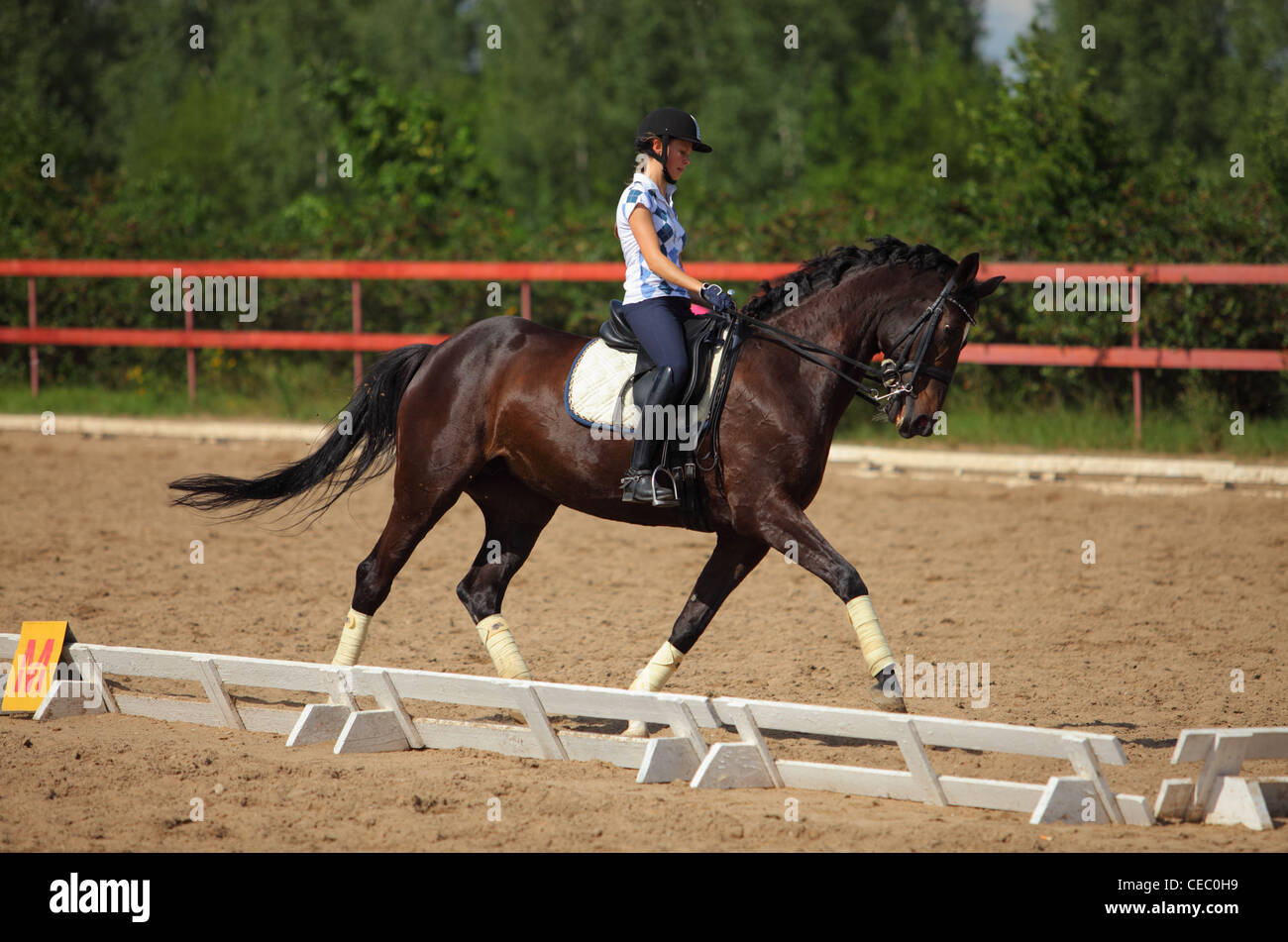 Horse with rider performing the Spanish walk - Stock Image