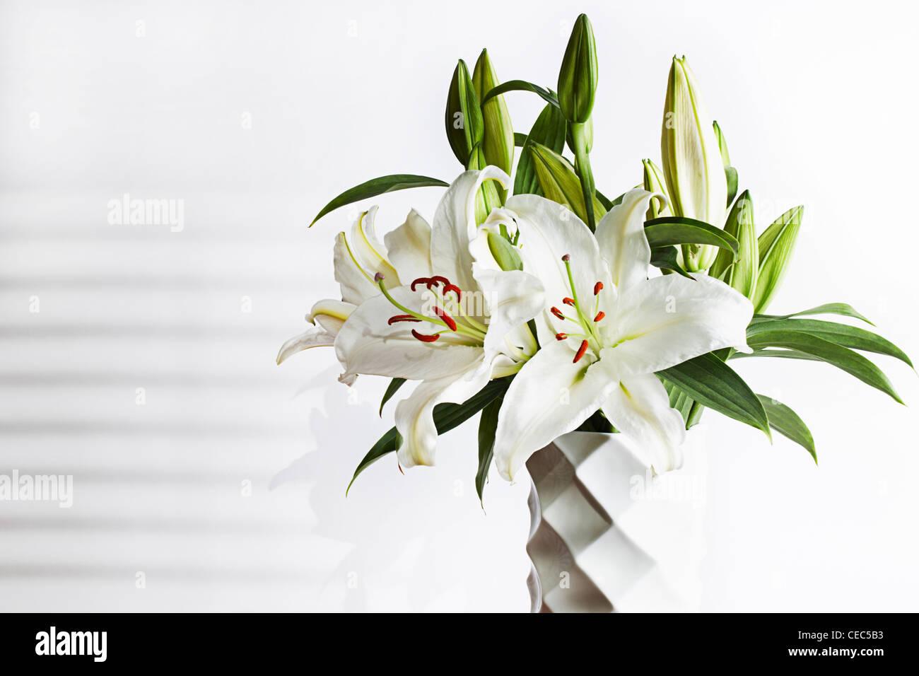 White lily lilium candidum madonna lily stock photo 43293575 alamy izmirmasajfo Gallery