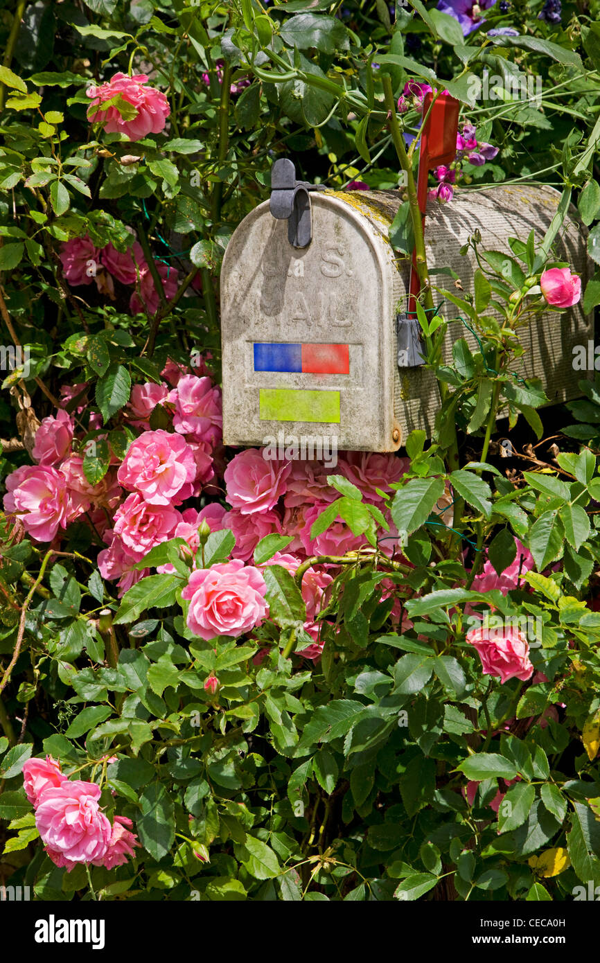 North American US mailbox in front garden amongst roses - Stock Image