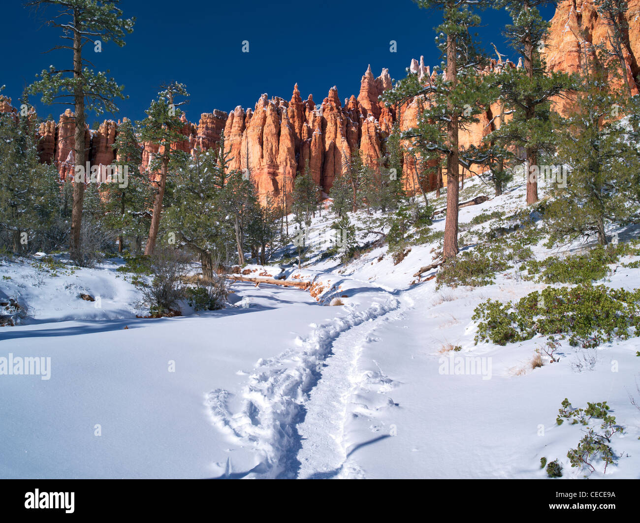 Path with Snow in Bryce Canyon National Park, Utah - Stock Image