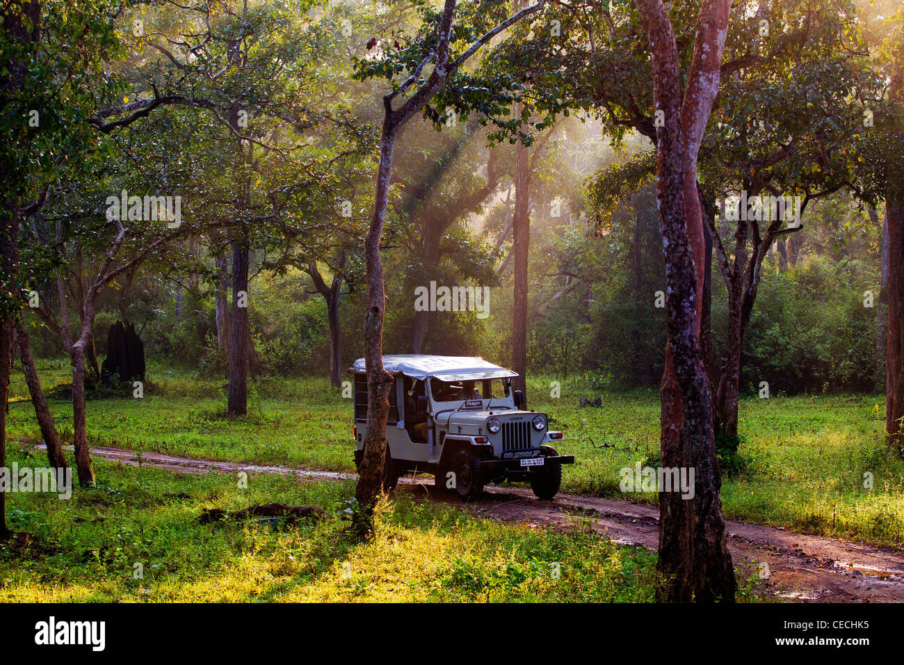 Safari Jeep taking tourists for a game drive, looking for animals in the early morning at Nagarahole National Park, - Stock Image