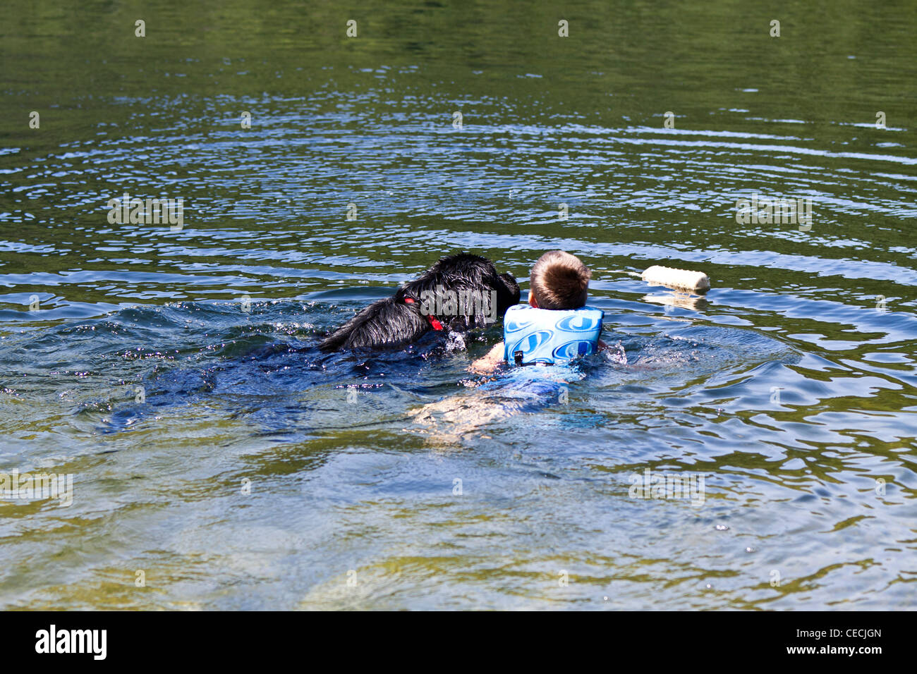 Child swimming with a Newfoundland dog. - Stock Image