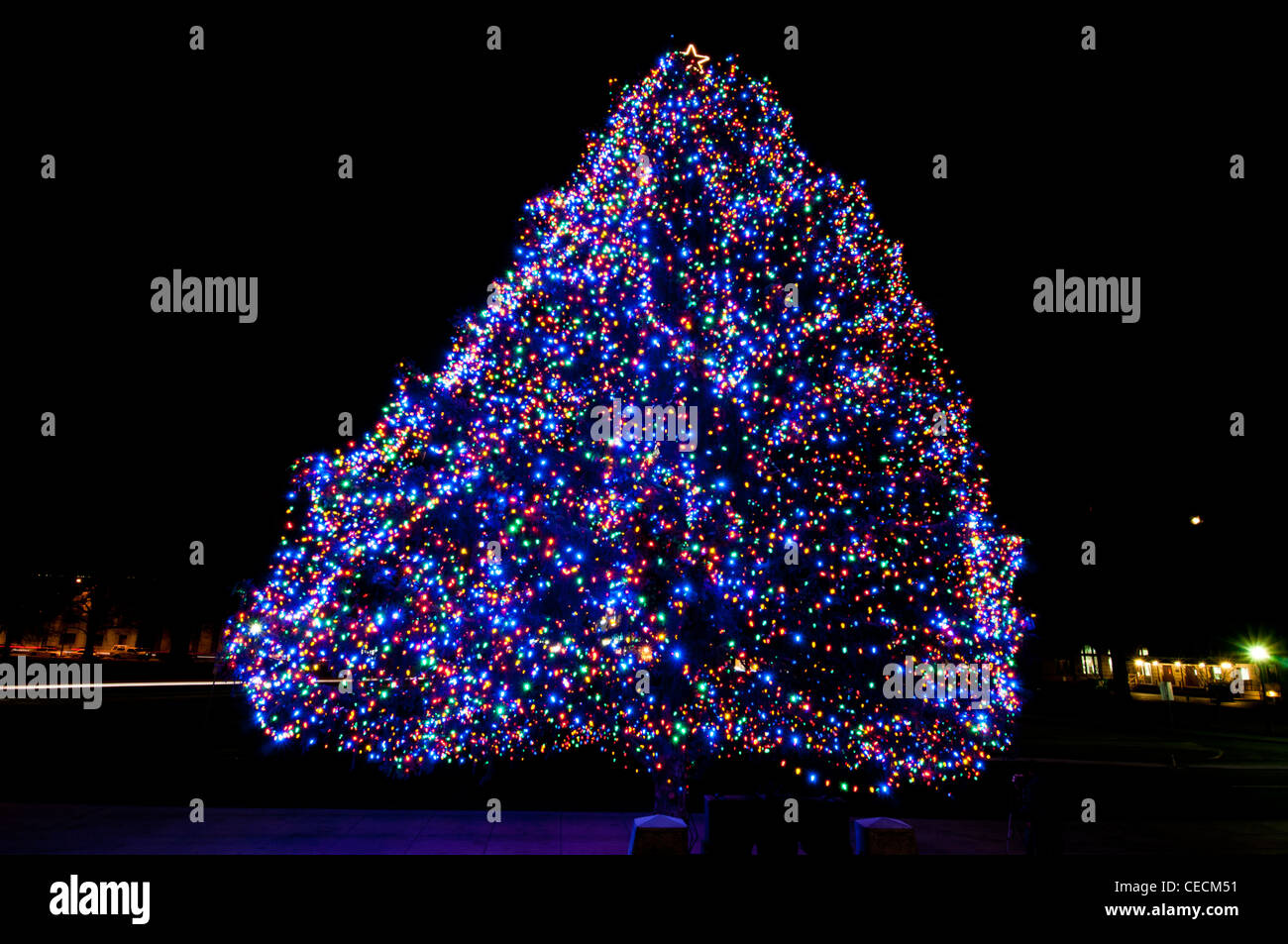 Idaho State official Christmas tree - 2011 - Stock Image