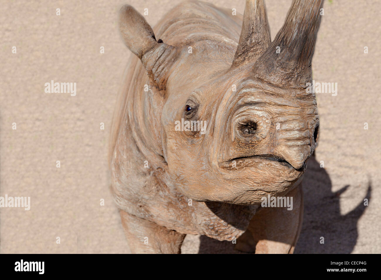 Rhinoceros close up - Stock Image