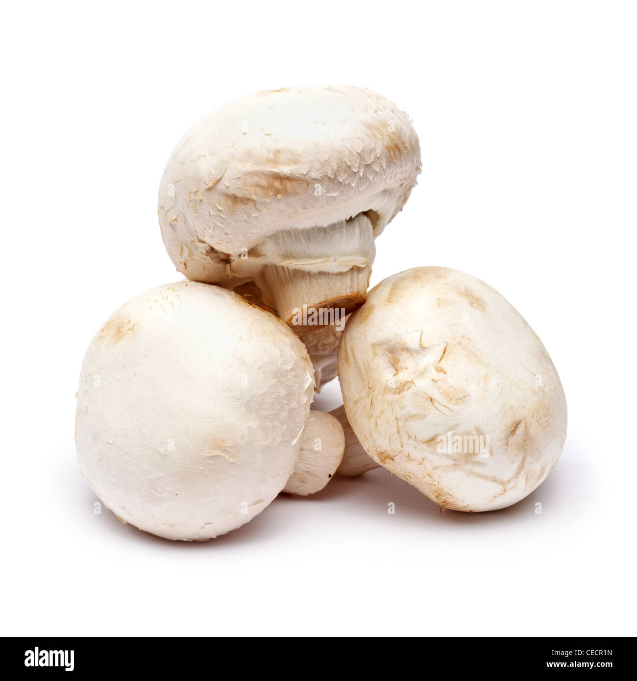 Mushrooms on white background - Stock Image