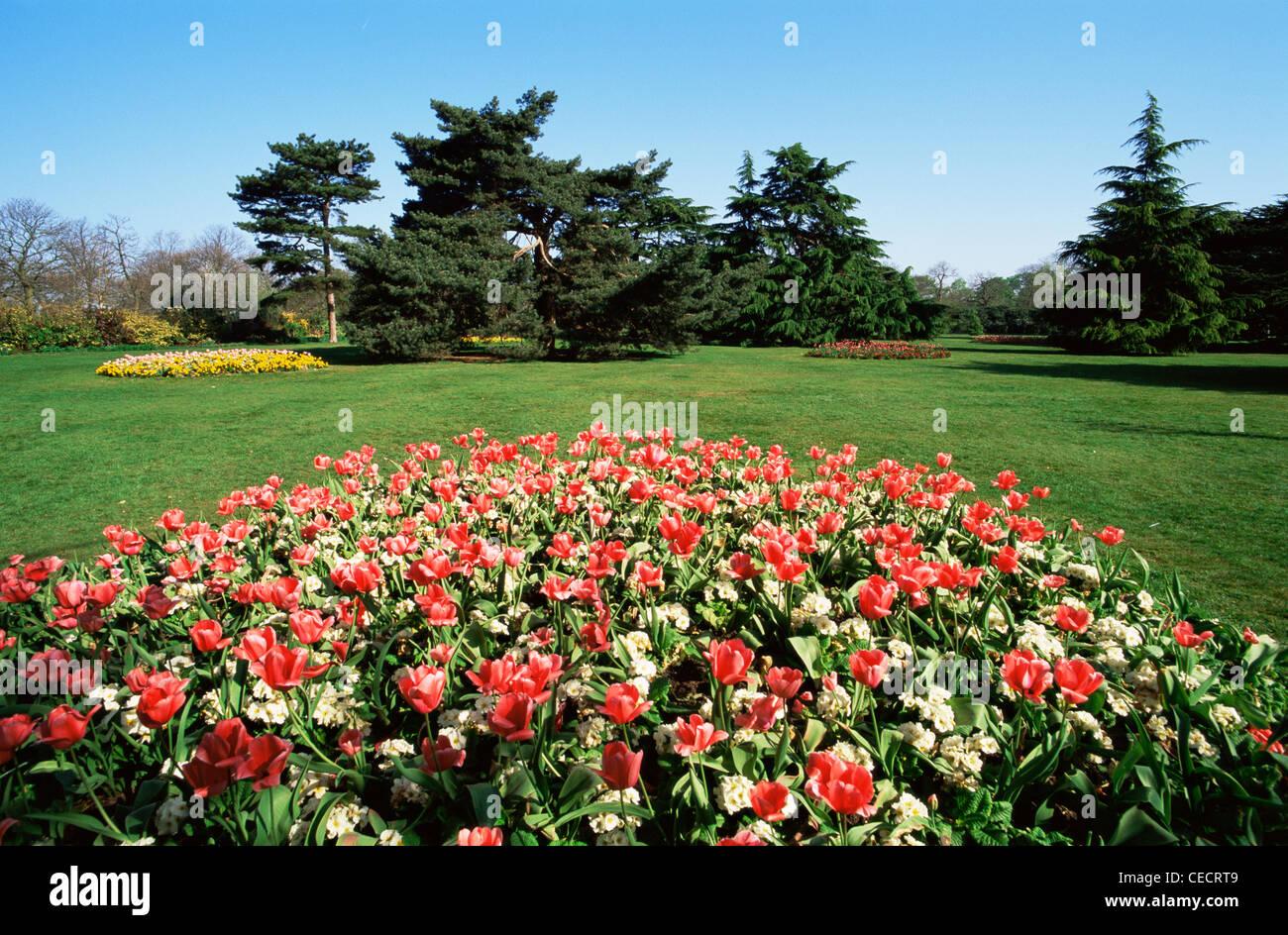 England london greenwich park spring flowers stock photo england london greenwich park spring flowers mightylinksfo