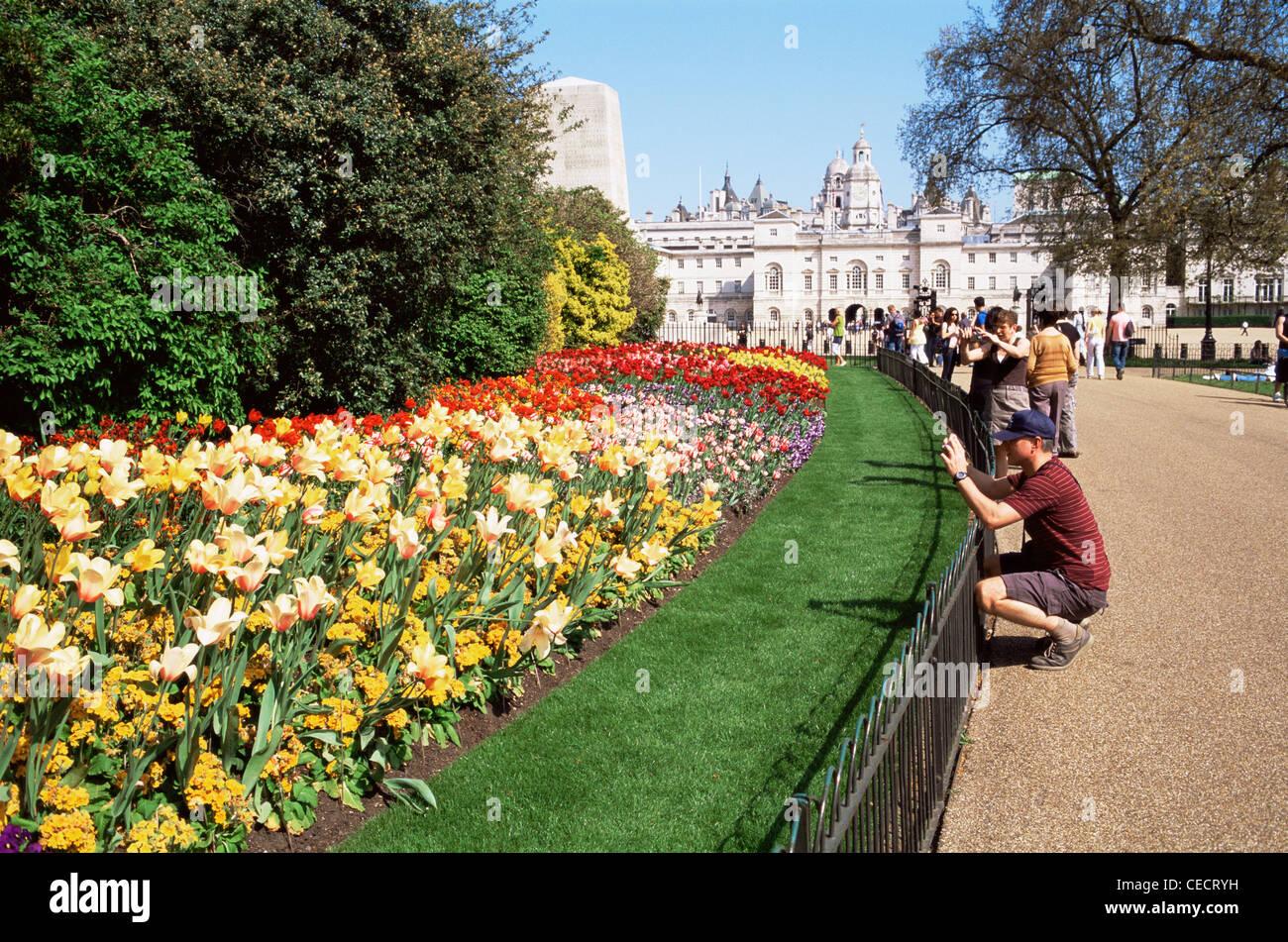 England london st james park spring flowers stock photo 43308149 england london st james park spring flowers mightylinksfo