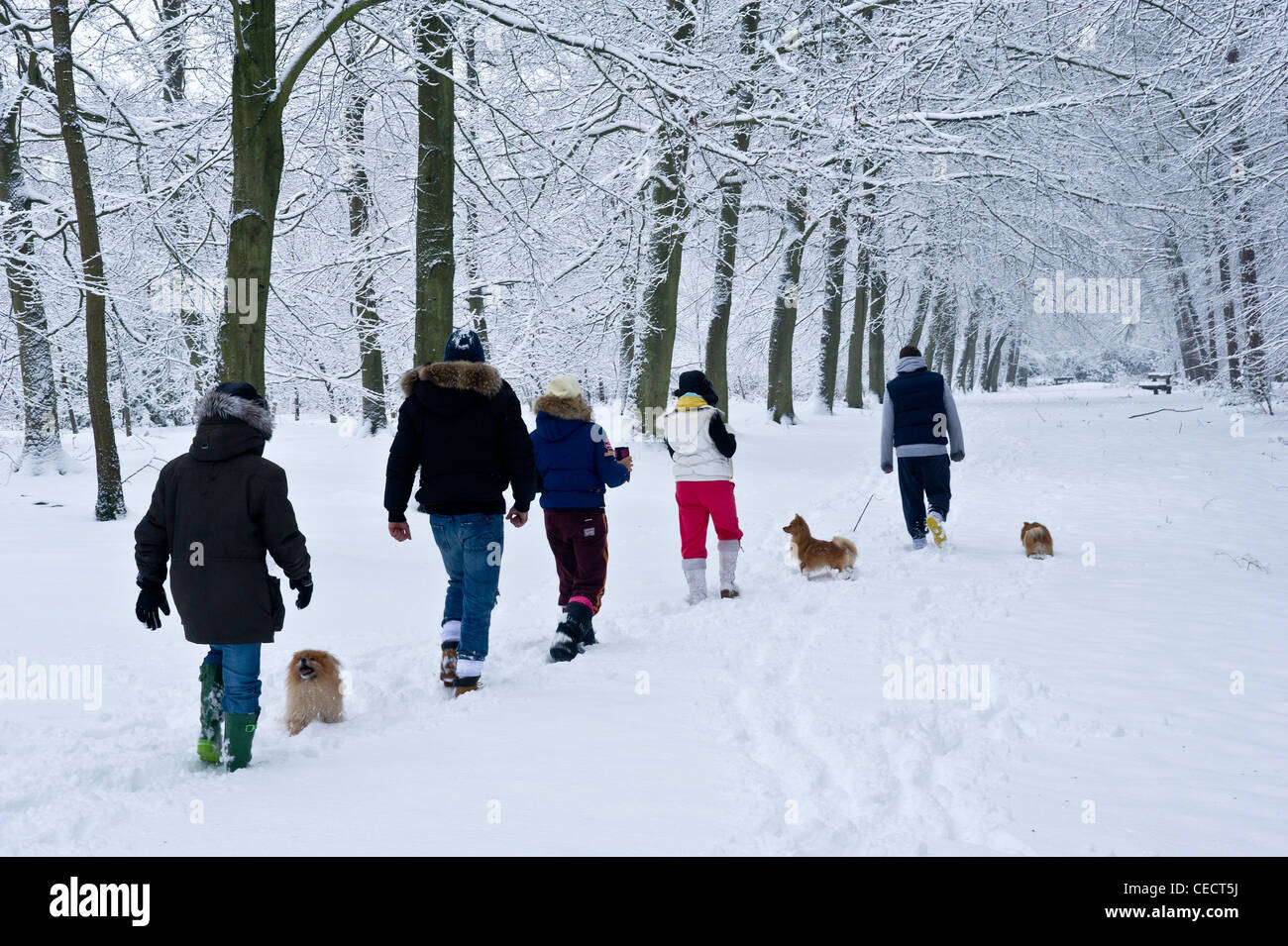 Woodlands in the snow - Stock Image