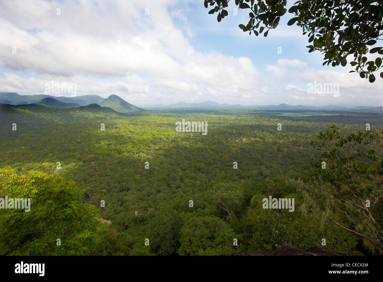 View of the primary tropical rainforest canopy, part of the Rewa Amerindian reserve, Guyana, South America - Stock Image