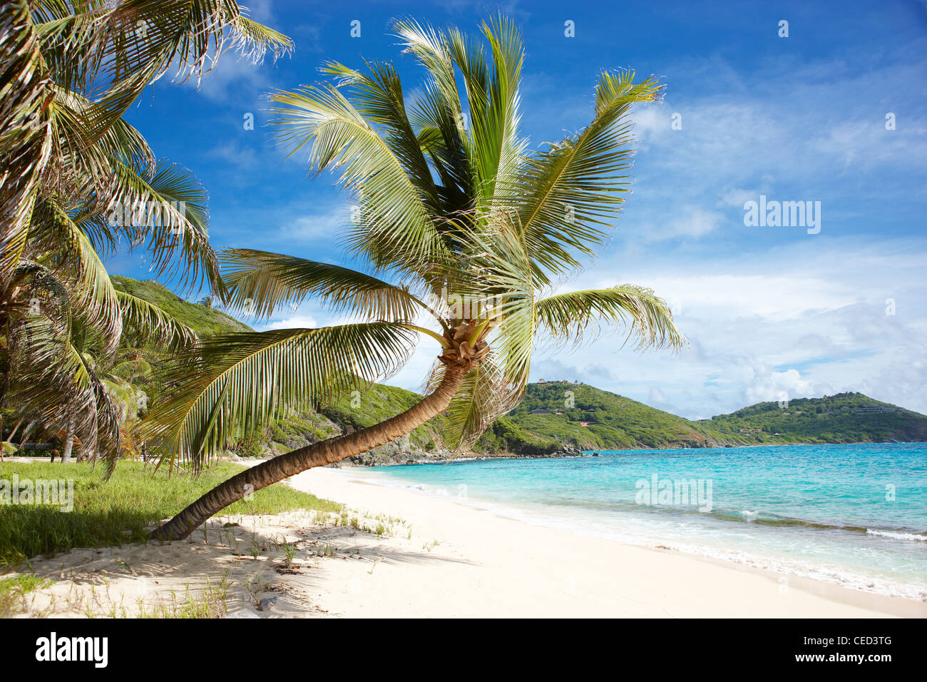 empty tropical beach palm tree - Stock Image