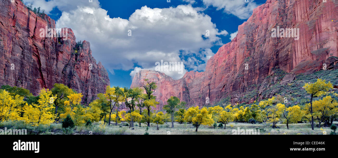 Fall colored trees. Zion National Park, Utah. - Stock Image