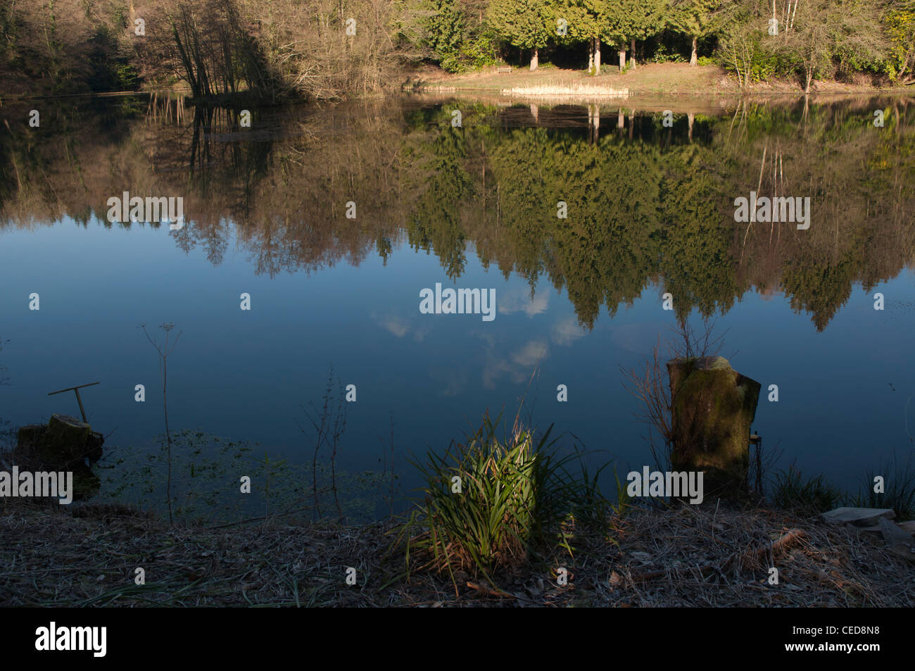 Forest lake in winter sunshine with reflections from conifer trees - Stock Image