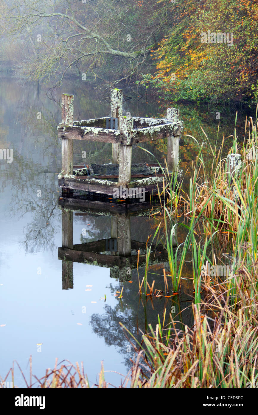 Still water and reflections at the lake near Fonthill in Wiltshire. - Stock Image