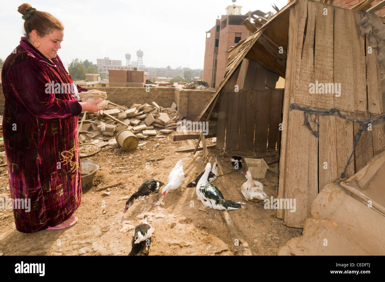 Woman breeding ducks on the rooftop of her house, a common practice in Egypt - Stock Image