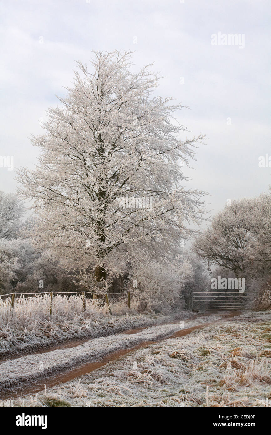 Cold frosty morning in January with hoar frost on the trees and grasses - Stock Image
