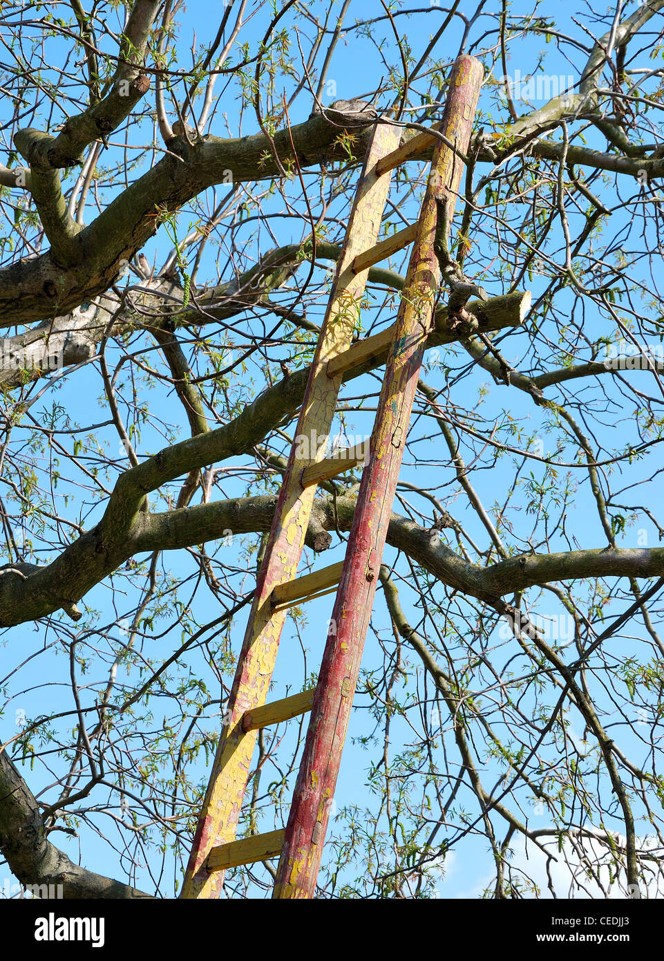Step ladder leant against the tree. - Stock Image