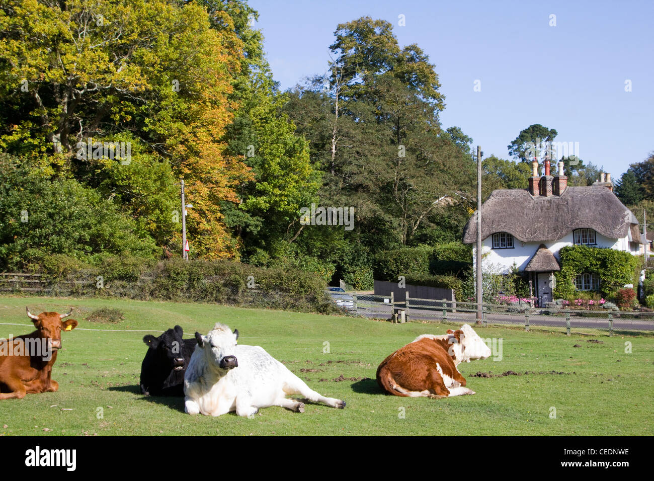 emery down near lyndhurst new forest hampshire england - Stock Image