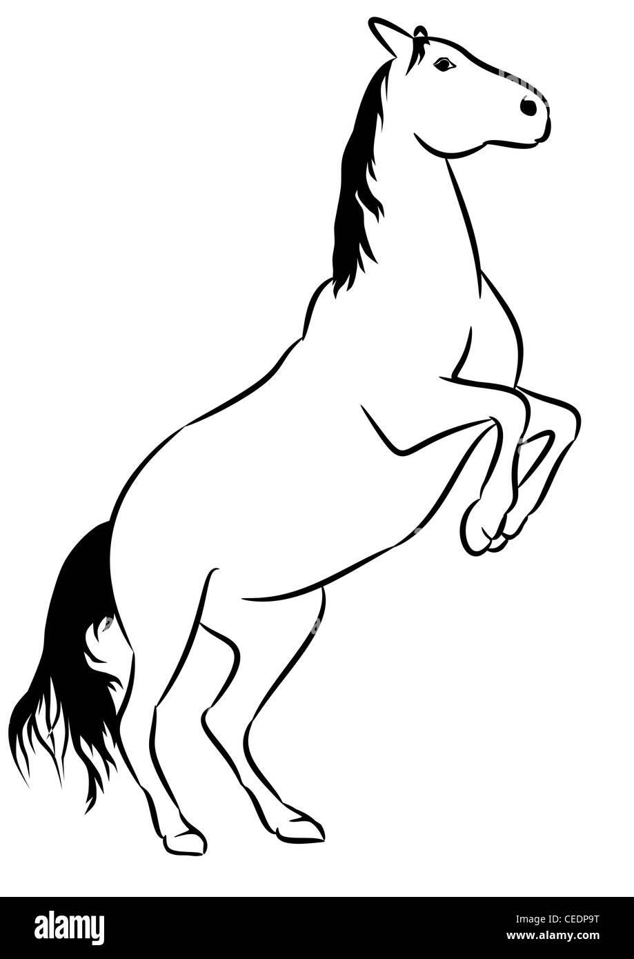 Wild Horse Line Drawing Stock Photo Alamy