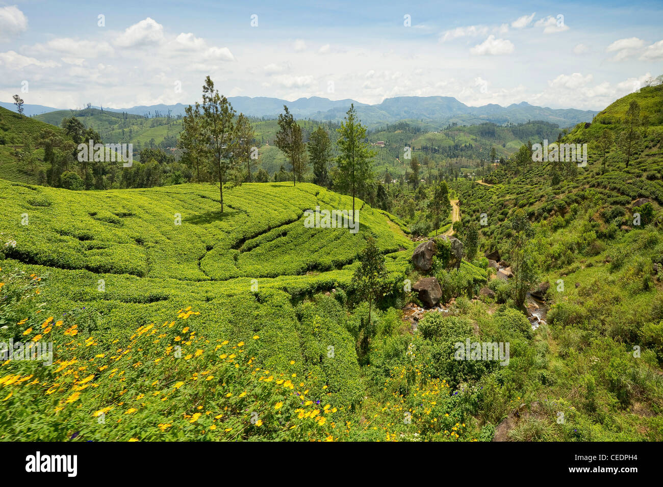 View from the scenic train through the Central Highlands, with it's hills & tea plantations, near Nuwara - Stock Image