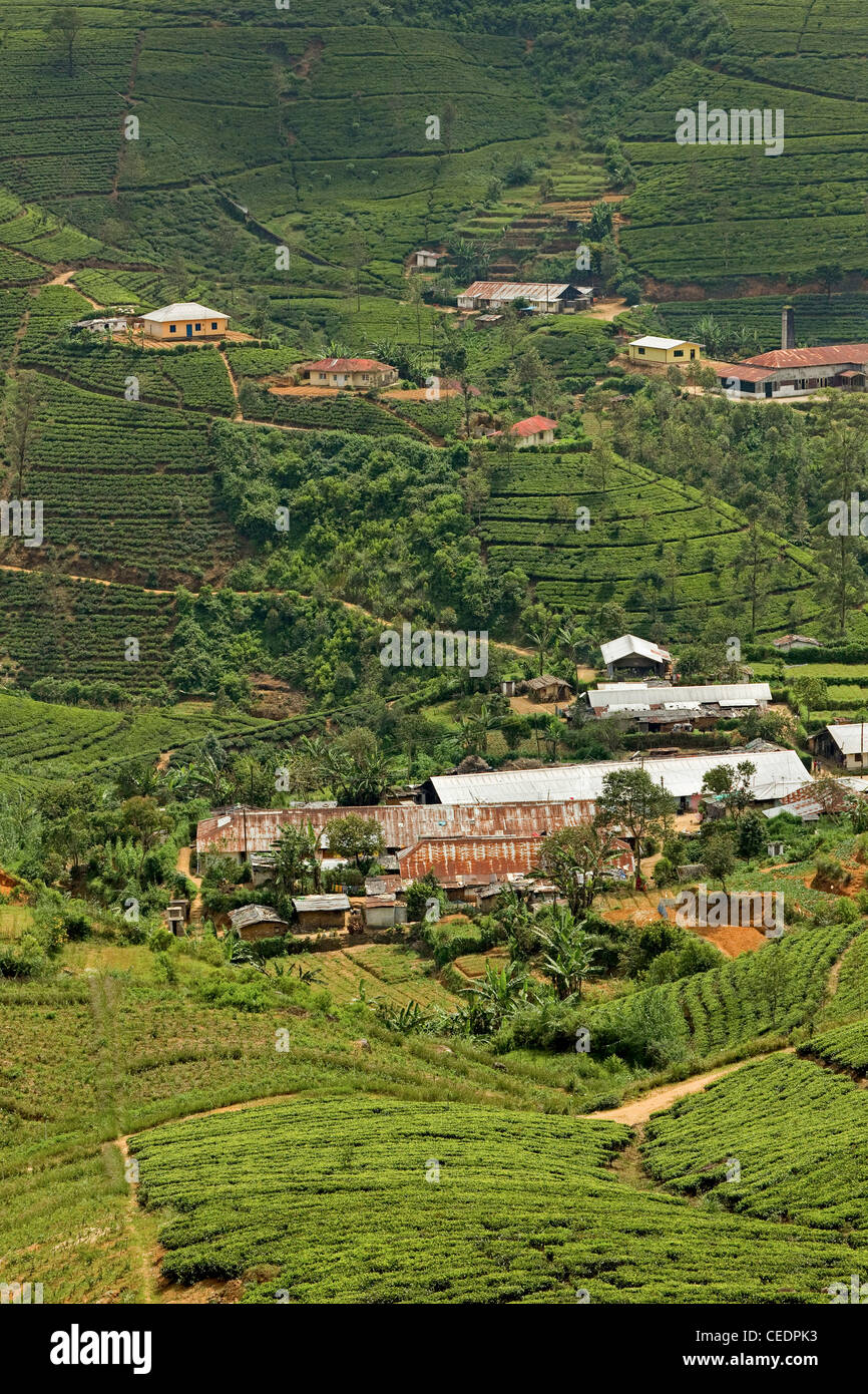 Homes and warehouses amidst tea plantations in the hill country of the Central Highlands near Nuwara Eliya, Sri - Stock Image