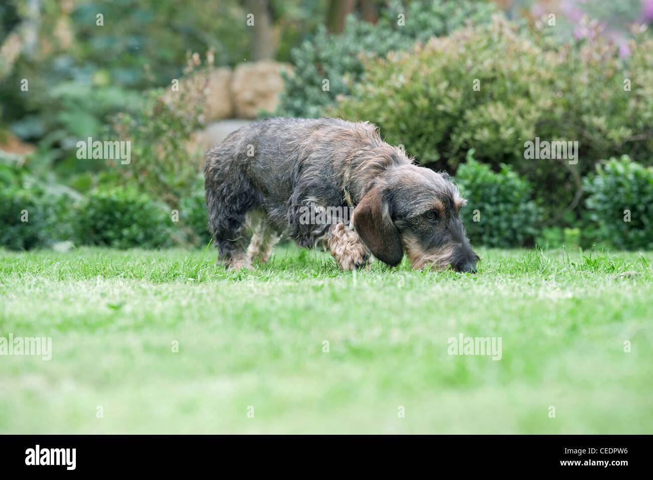 A small dog in a garden - Stock Image