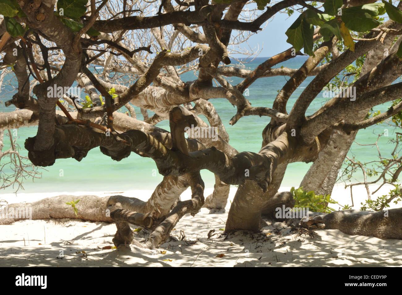 beach mangrove - Stock Image