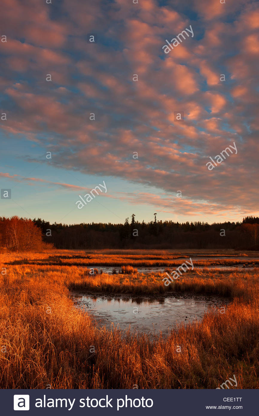 The setting sun lights up low clouds over the Edmonds Marsh in Edmonds, Washington. - Stock Image
