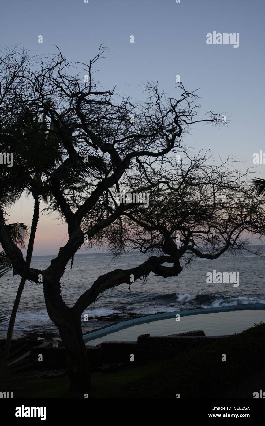 Hawaii Sunrise Sillouette Gnarled Tree - Stock Image