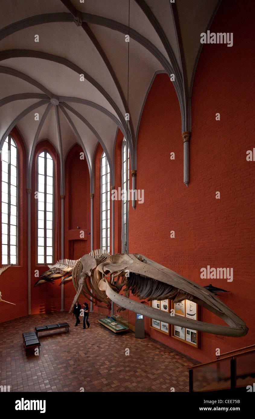 Stralsund, Meeresmuseum im Katharinenkloster - Stock Image