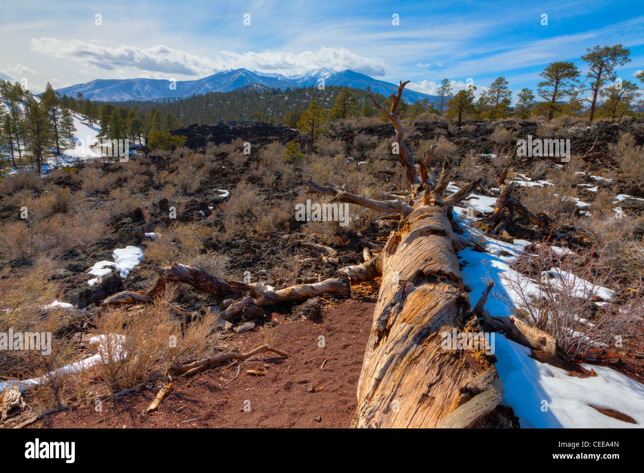 Lava field at Sunset Crater in Flagstaff, Arizona - Stock Image